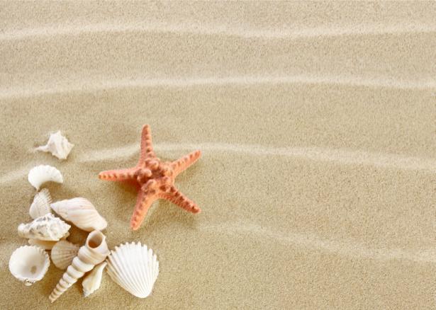 Фотообои звезда ракушки на песке (underwater-world-00088)