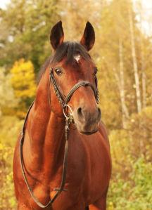 Фотообои Лошадь лес (animals-0000437)