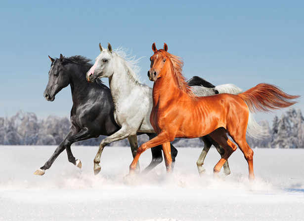 Фотообои Три грации (animals-582)