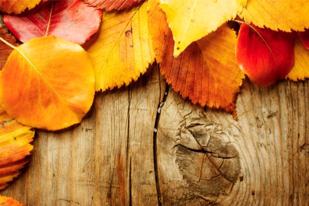Фотообои листья деревянные доски (background-0000174)