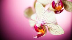 flowers-0000039