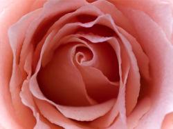 flowers-0000262