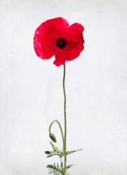 flowers-0000290