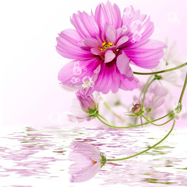 Розовые цветы фото обои (flowers-0000308)