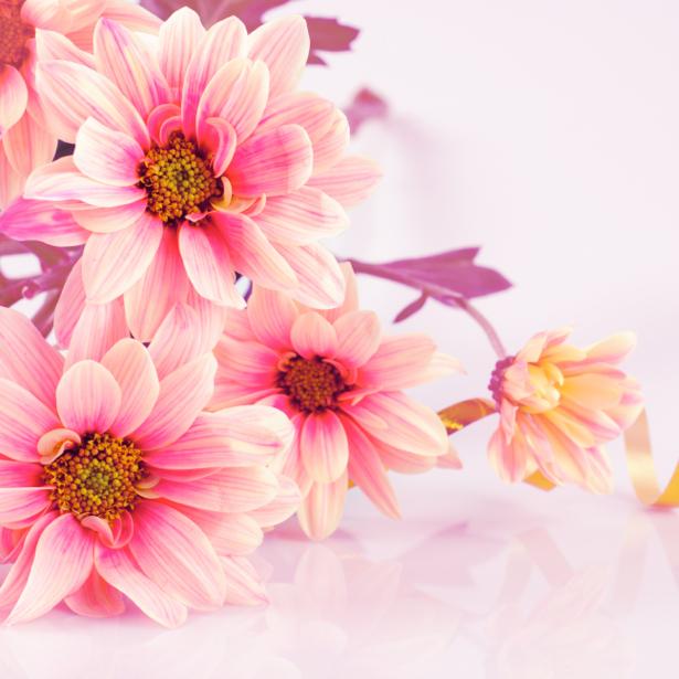 Обои фото букет цветов (flowers-0000334)