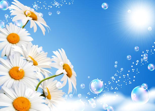 Ромашки цветочные обои (flowers-0000435)