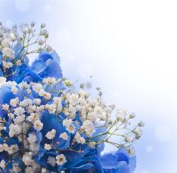 flowers-0000443