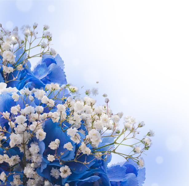 Обои фото цветы Ирисы (flowers-0000443)