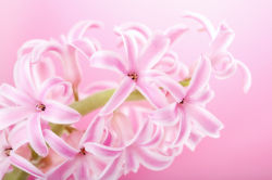 flowers-0000563