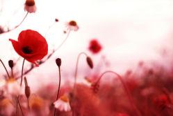 flowers-0000601