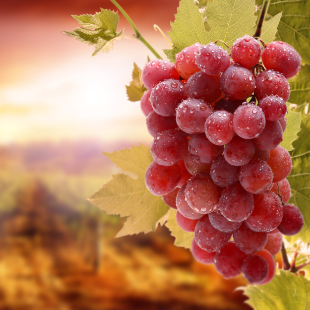 Гроздь винограда Фотообои для кухни (food-0000202)