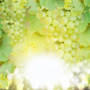 Фотообои для кухни зеленый виноград (food-0000274)