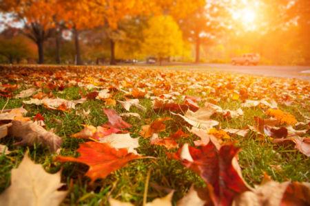 Фотообои осенний лес листья (nature-0000821)