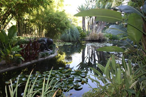 Фотообои с природой пруд (nature-00030)