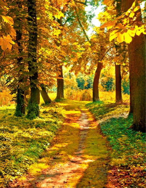 Фотообои дорога осенняя в лесу (nature-00365)