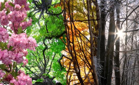 Фотообои Весна лето осень (nature-00537)