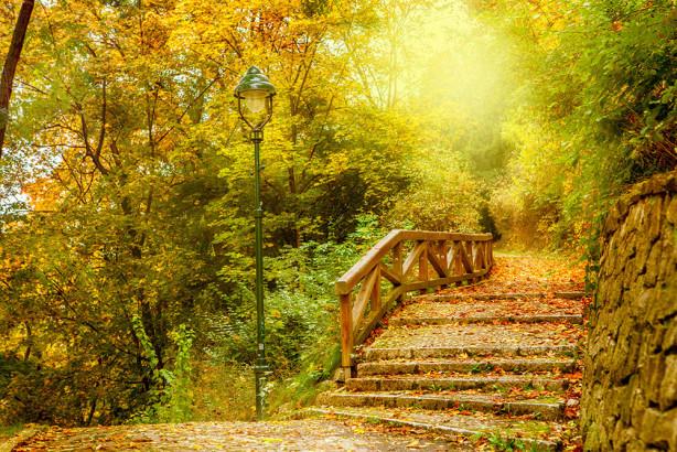 Фотообои Лестница в саду (nature-872)