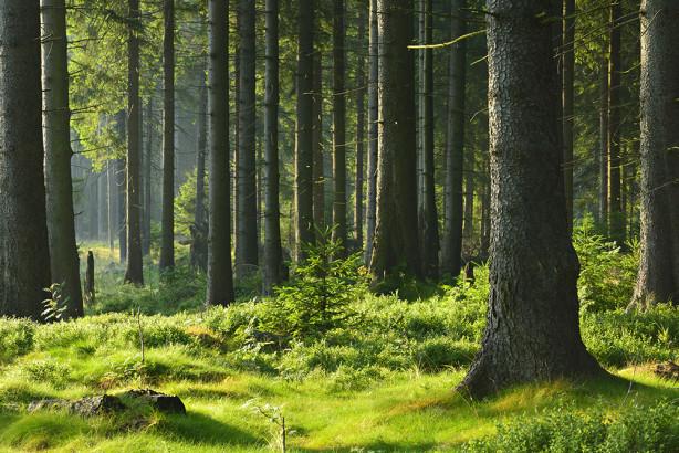 Фотообои Зеленый лес (nature-873)