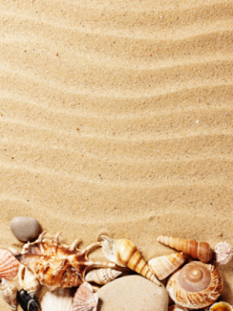Фотообои морские на песке ракушки (sea-0000105)
