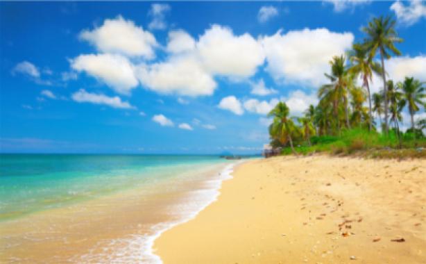 Фотообои пальмы на море (sea-0000152)