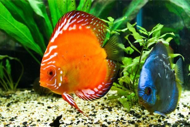 Фотообои ванная водоросли рыбки (underwater-world-00019)