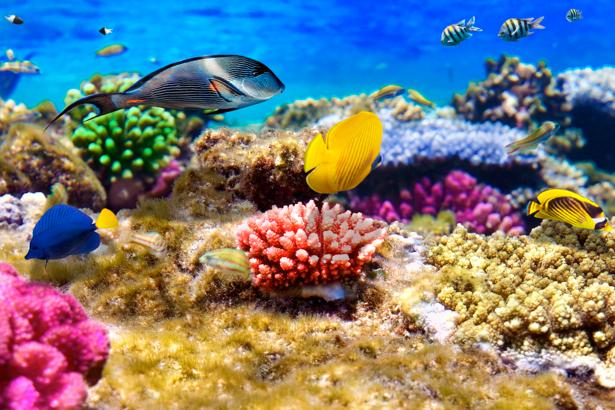 Фотообои ванная коралловый риф (underwater-world-00033)