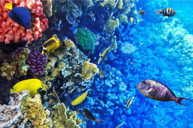 Фотообои 3д море кораллы, рыбки (underwater-world-00146)