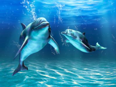 Фото обои дельфины под водой (animals-0000073)