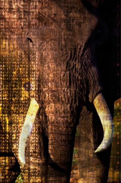 Фотообои слон, мамонт, бивни (animals-0000088)