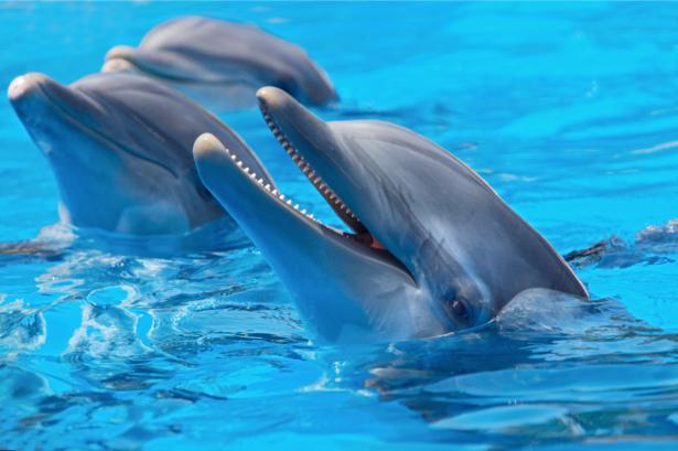 Фотообои дельфины беседа (animals-0000154)