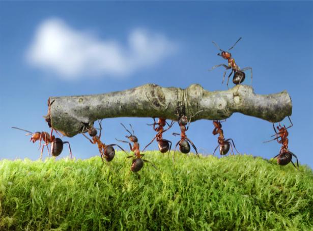 Фотообои муравьи 7 пашет 1 руками машет (animals-0000319)