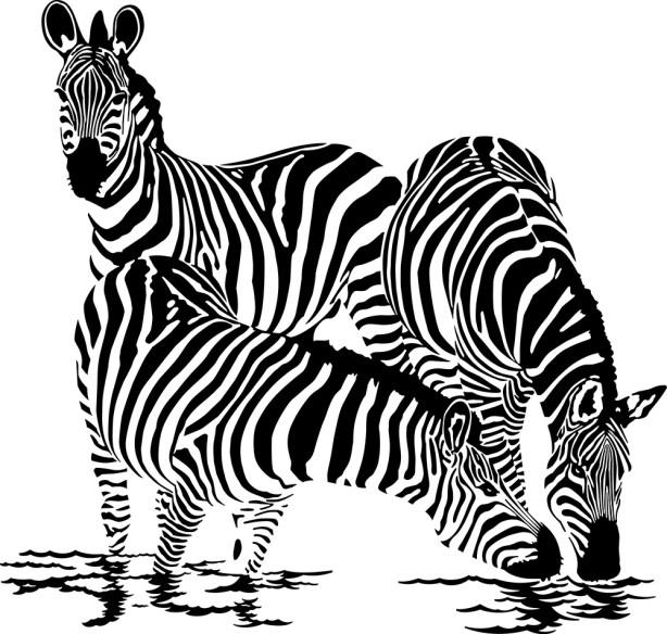 Фотообои Три зебры (animals-510)