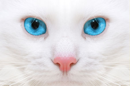 Фотообои Голубые глаза (animals-569)