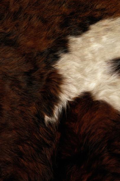 Фотообои шкура животных шерсть (background-0000314)