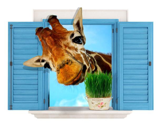 Фотообои Жираф и окно (child-476)