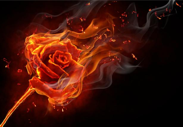 Фотообои огненная роза (fantasy-0000001)