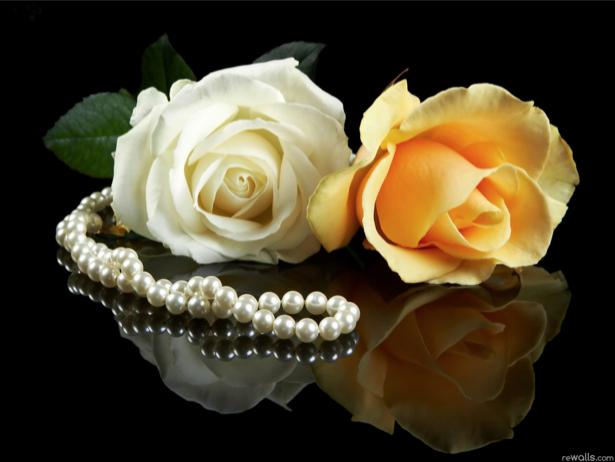 Белая и желтая розы фотообои цветы (flowers-0000102)