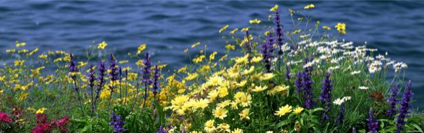 Полевые цветы для спальни фото (flowers-0000106)