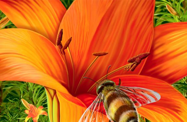 Обои фото Желтая лилия с пчелой (flowers-0000125)