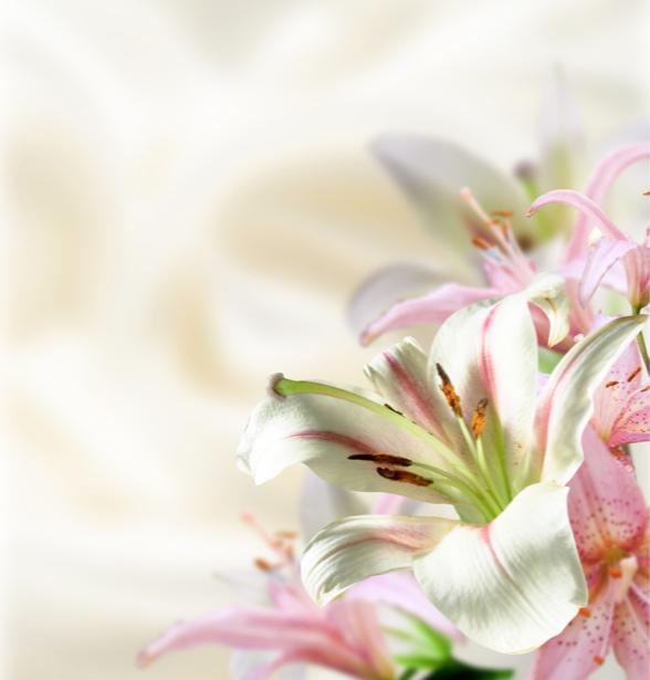 Обои фото Белые лилии (flowers-0000197)