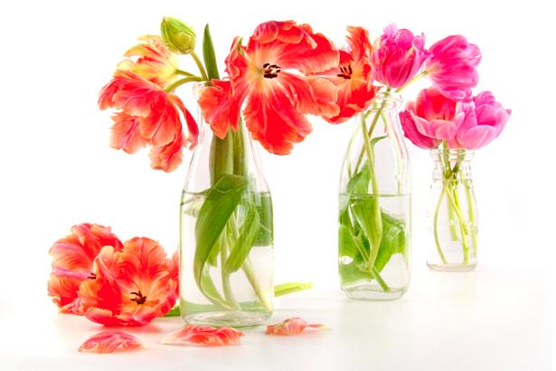 Тюльпаны в бутылках - Фото обои на стену (flowers-0000256)