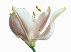 flowers-0000356