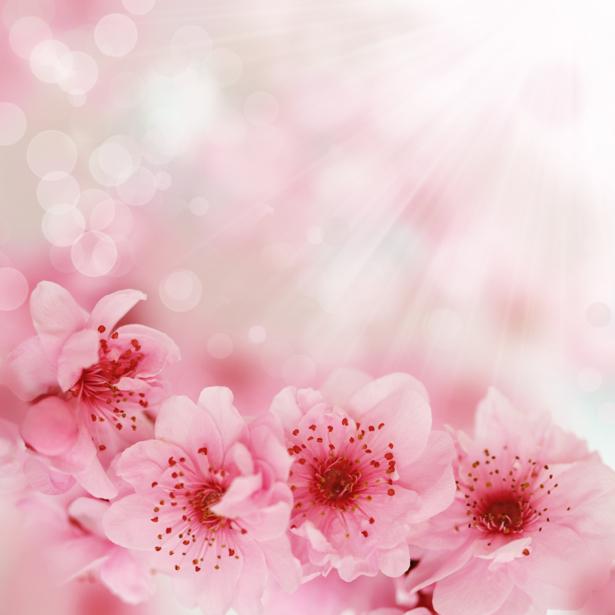 Обои фото ветка цветущего дерева (flowers-0000425)