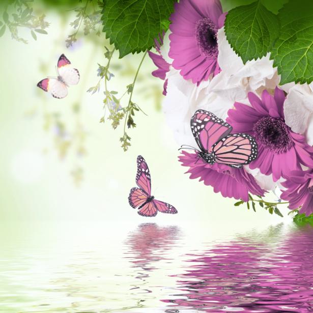 Обои для стен цветы и бабочки (flowers-0000579)