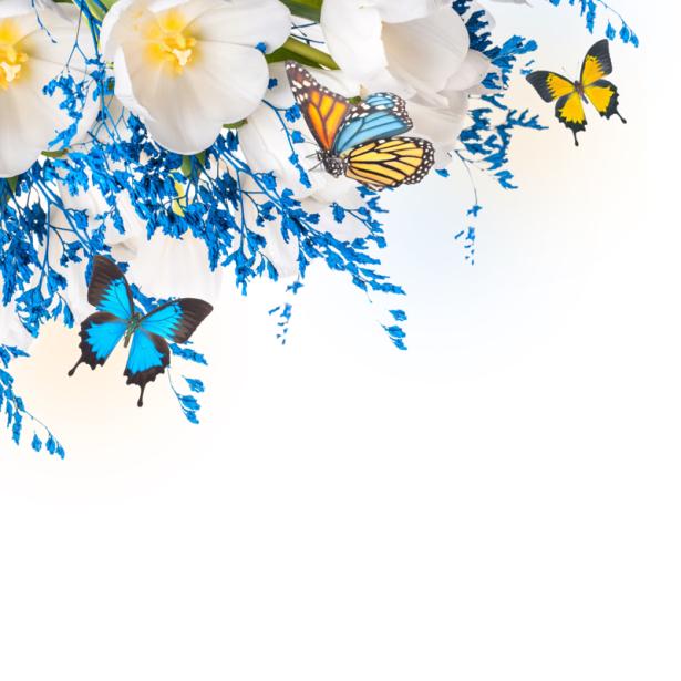 Обои для стен белые цветы бабочки (flowers-0000639)