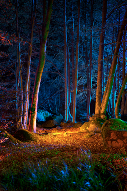 Фотообои яркий ночной лес (nature-00270)