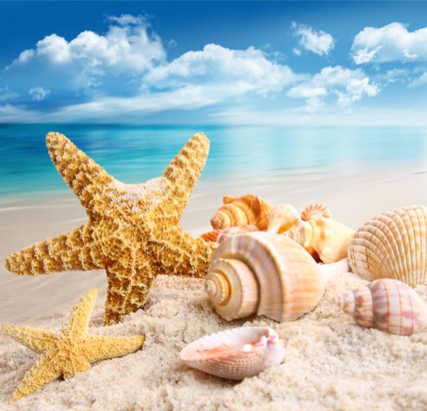 Фотообои ракушки море (sea-0000208)