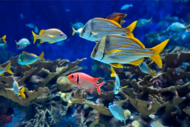 Фотообои ванная риф 3д море рыбки (underwater-world-00015)