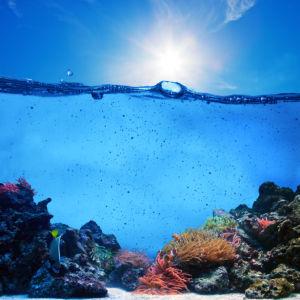 Фотообои для ванны подводный риф (underwater-world-00193)