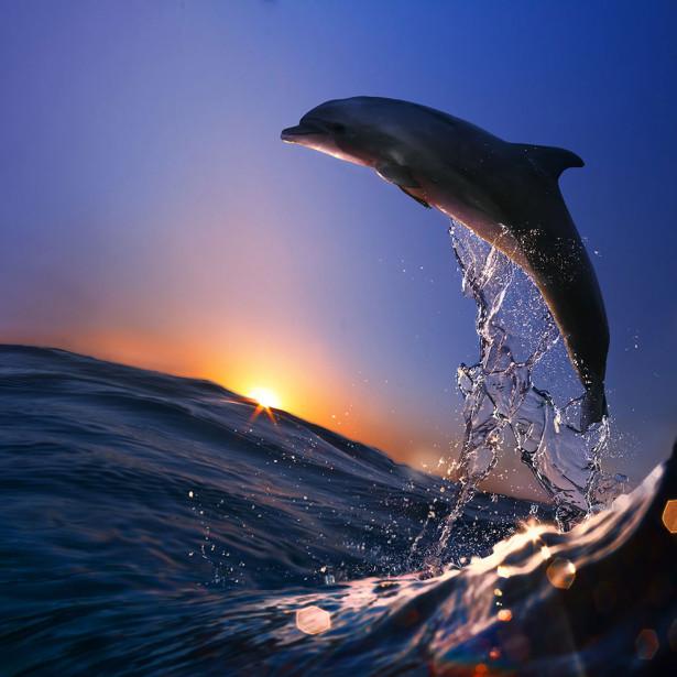 Фотообои Путь дельфина (animals-518)